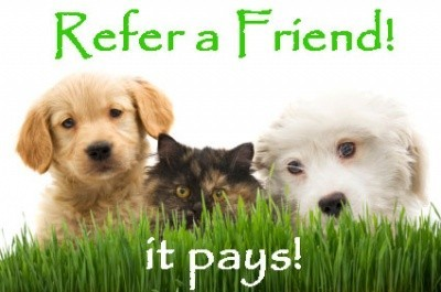 Websites That Pay You to Refer Friends: moneynomad.com/websites-that-pay-you-to-refer-friends